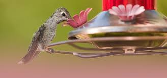 Jayco Finch Floor Plan by Attracting Hummingbirds To Your Campsite Terrytown Rv Blog