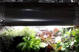 Grow Lights For Indoor Herb Garden - diy indoor grow light inexpensive way to growing an indoor garden