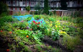 flower garden in amsterdam preparing for the spring urban agriculture style u2013 the urban observer