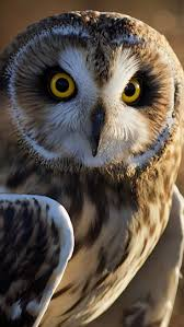 best 25 owl photos ideas on pinterest owls snowy owl and white
