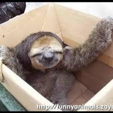 Sloth Meme Maker - funny sloth meme generator