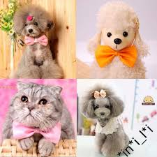 Cute Dog Products by Popular Bowtie Dog Collar Buy Cheap Bowtie Dog Collar Lots From