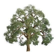 live oak trees ho scale model railroad tree 94350 by jtt 94350