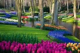 keukenhof flower gardens best way to get to the keukenhof tulip and bulb gardens