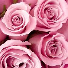bulk roses bulk flowers bloomsbythebox