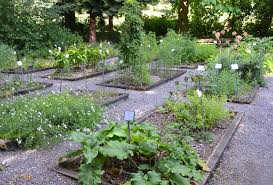 herbal garden medicinal herb garden in our nature