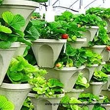 44 best vertical gardening 101 images on pinterest gardening