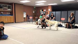 guide dog harness what does a guide dog do when they u0027re out of harness youtube