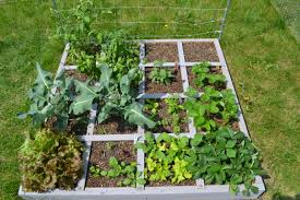 square foot vegetable garden layout shorewood illinois square foot garden u2013 my square foot garden