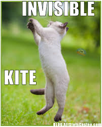 Invisible Cat Memes - funny casino cats lucky online casino artlucky online casino art