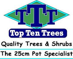 wholesale nurseries in mornington peninsula top ten trees
