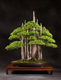 bonsai planters surripui net