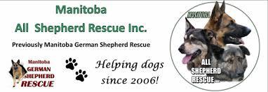 belgian sheepdog rescue ontario home