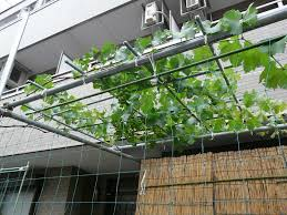 spring growing vegetables in a small garden when to plant a