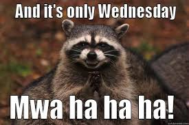 Funny Wednesday Memes - wednesday racoon quickmeme
