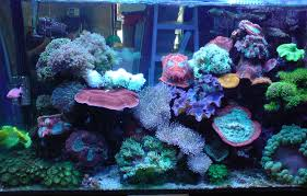 design u0026 build marine freshwater aquarium 10 years warranty