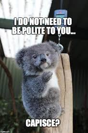 Meme Generator Koala - baby koala italian gesture meme generator imgflip