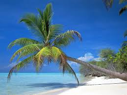Palm Tree Wallpaper Tree Wallpaper Pictures