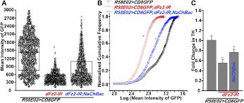 maturation of a central brain flight circuit in drosophila