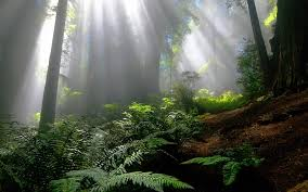 enchanted forest wallpapers best enchanted forest wallpapers in