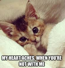 Cute Kitty Memes - my heart aches cat meme cat planet cat planet
