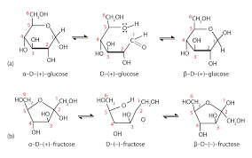 the basics of general organic and biological chemistry 1 0