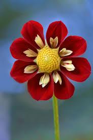 madagascar native plants 395 best flora images on pinterest plants nature and flowers