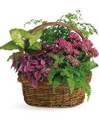 Plants Blooming Send Blooming Plants Online Same Day And Local Delivery Fresh