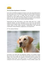 top 5 best dog breeds in the world