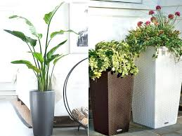 Best Online Home Decor Artificial Plants For Home Decor India Best Plants That Suit Your