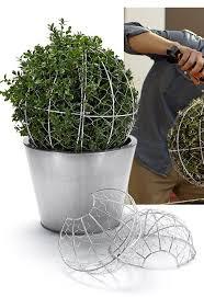 Topiaries Plants - best 25 topiary plants ideas on pinterest topiaries decorative