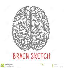 brain anatomy coloring book vintage sketch of human brain for creative design stock vector
