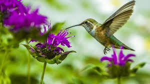 hummingbird flowers top 10 plants and flowers that attract hummingbirds to your yard