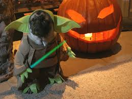 9 dogs who totally nailed halloween rover com