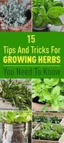 10 Vegetables U0026 Herbs You by 10 Easy To Grow Herbs For A Simple Kitchen Herb Garden Herbs