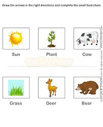 free 2nd grade science worksheets food chain worksheets free