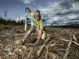 seriously metal photos of canada s tree planters vice