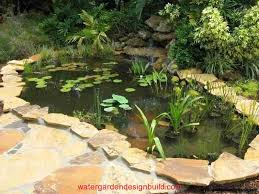 our pond pictures watergardendesignbuild com