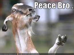Peace Sign Meme - meme movie ftw youtube