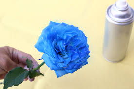 3 ways to create blue roses wikihow