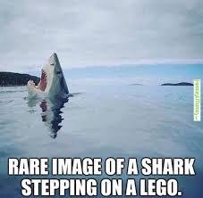Inspirational Funny Memes - visit www amazingdogtales com for the best funny dog joke pics