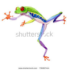 frog stock images royalty free images vectors