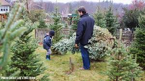 where to buy a christmas tree in central massachusetts discover