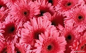 free flowers free wallpaper free flower wallpaper beautiful flower