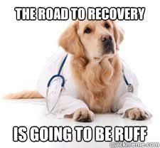 Dog Doctor Meme - how do you find a vet for your exotic pet natural healing and
