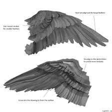 how to draw wings key concepts needed to make a realistic wings