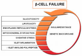 beta cell function and failure in type 2 diabetes intechopen