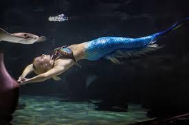 world u0027s leading u201creal life mermaid u201d performer in the press