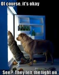 Cat And Dog Memes - of course its ok visit http dailyhaha com pictures htm for daily