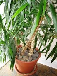 House Plants Diseases - tree care isa certified arborist